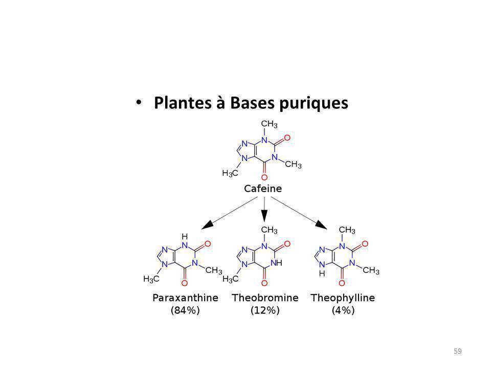 Plantes à Bases puriques 59