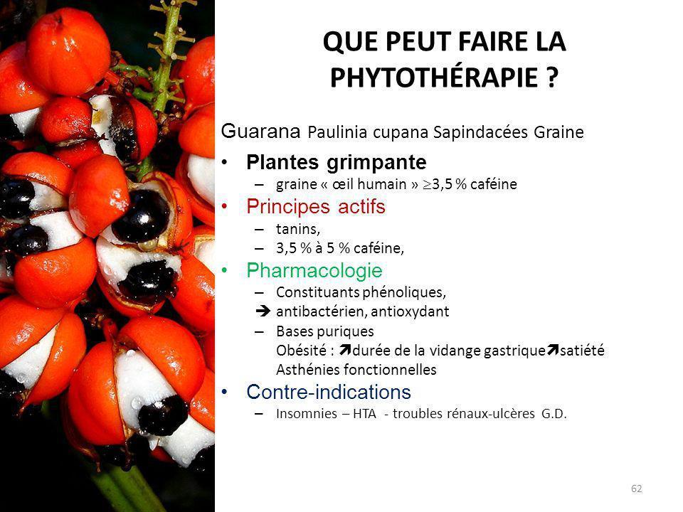 QUE PEUT FAIRE LA PHYTOTHÉRAPIE ? Guarana Paulinia cupana Sapindacées Graine Plantes grimpante – graine « œil humain » 3,5 % caféine Principes actifs