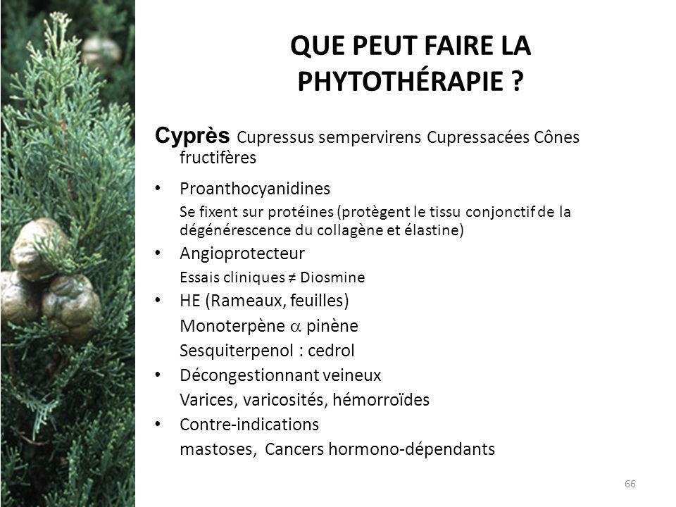 QUE PEUT FAIRE LA PHYTOTHÉRAPIE ? Cyprès Cupressus sempervirens Cupressacées Cônes fructifères Proanthocyanidines Se fixent sur protéines (protègent l