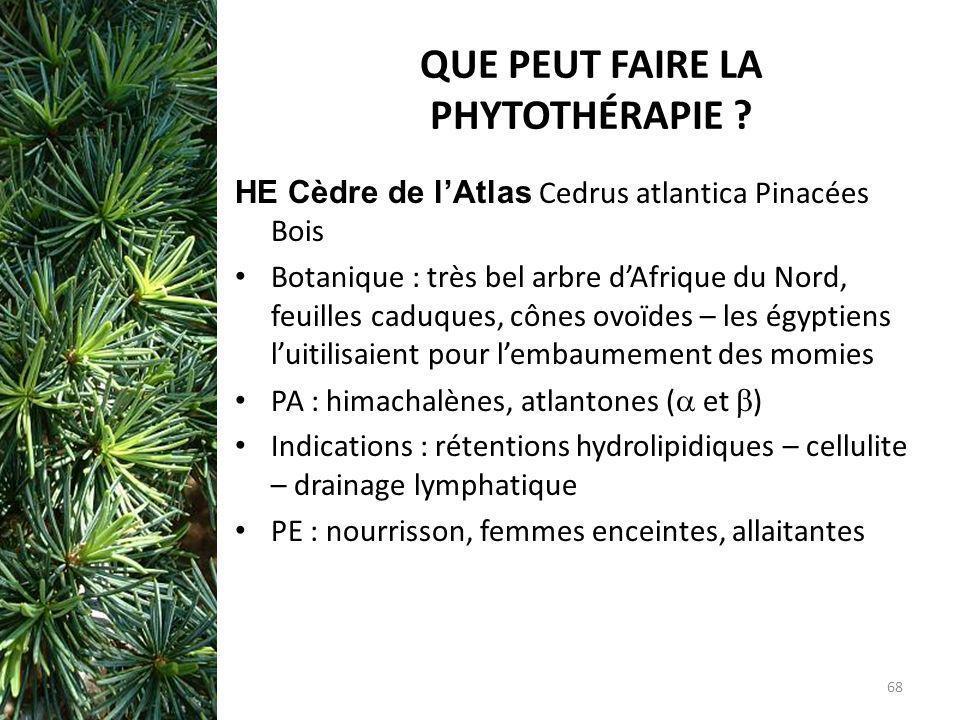 QUE PEUT FAIRE LA PHYTOTHÉRAPIE ? HE Cèdre de lAtlas Cedrus atlantica Pinacées Bois Botanique : très bel arbre dAfrique du Nord, feuilles caduques, cô