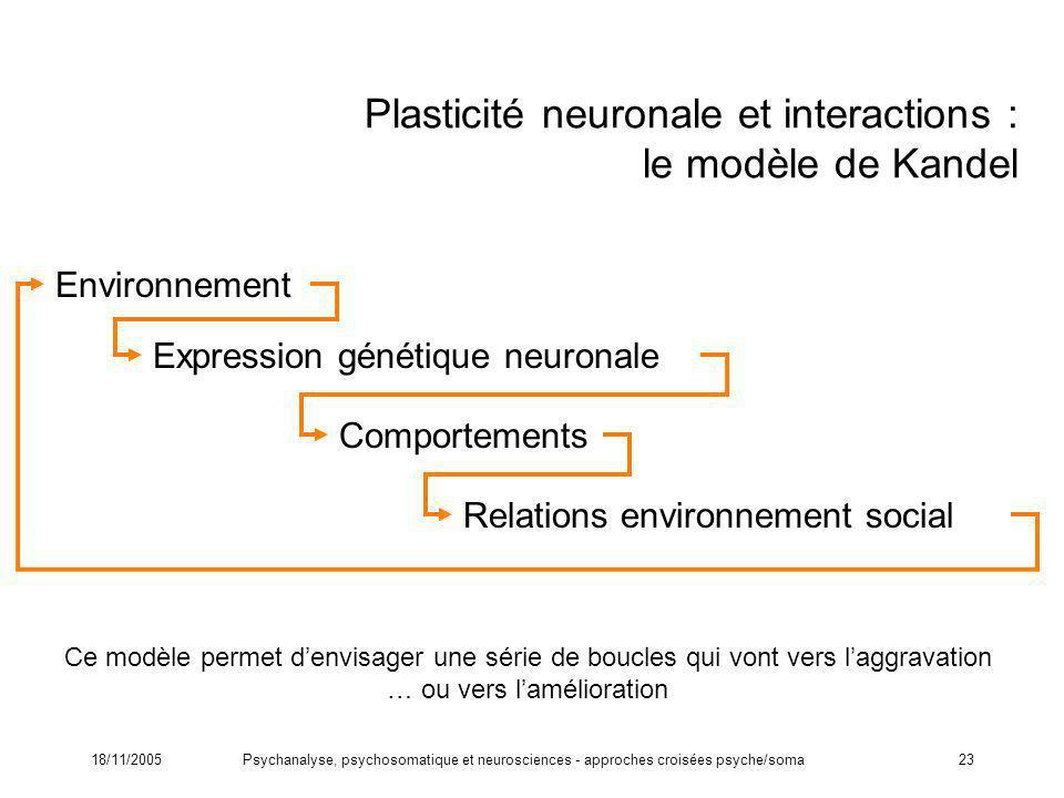 18/11/2005Psychanalyse, psychosomatique et neurosciences - approches croisées psyche/soma23 Plasticité neuronale et interactions : le modèle de Kandel