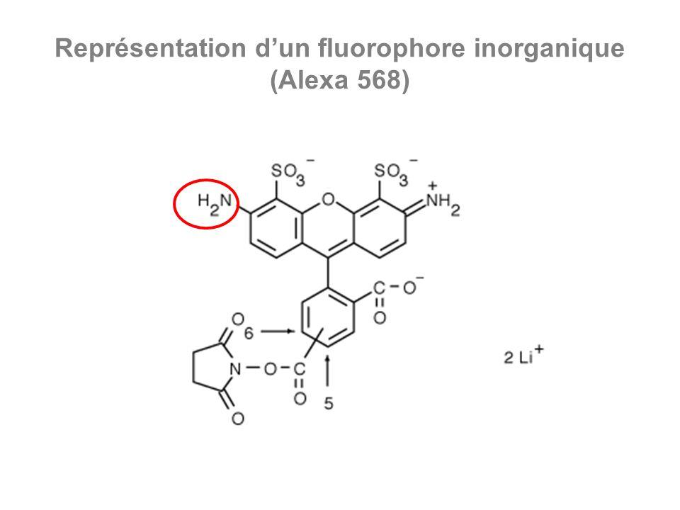 Représentation dun fluorophore inorganique (Alexa 568)