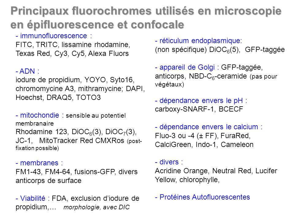 - immunofluorescence : FITC, TRITC, lissamine rhodamine, Texas Red, Cy3, Cy5, Alexa Fluors - ADN : iodure de propidium, YOYO, Syto16, chromomycine A3,