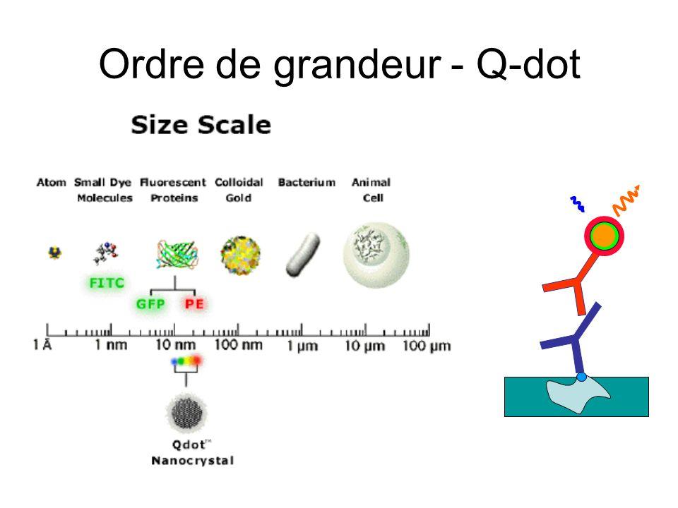 Ordre de grandeur - Q-dot