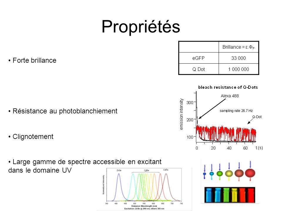 Propriétés Brillance = ε.Φ F eGFP33 000 Q Dot1 000 000 Forte brillance Résistance au photoblanchiement Clignotement Large gamme de spectre accessible