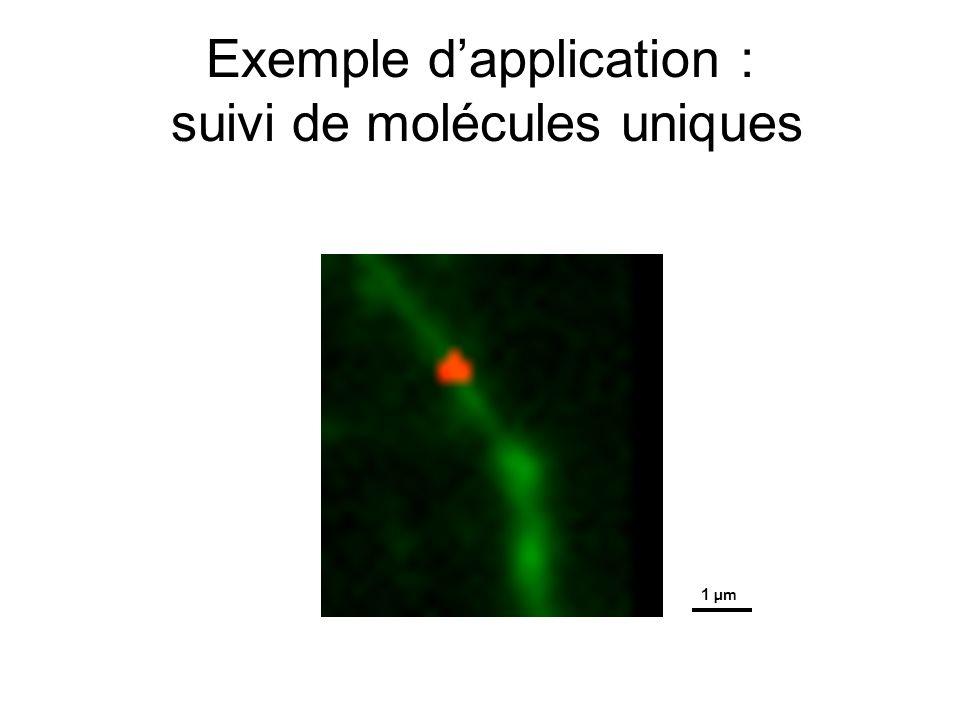Exemple dapplication : suivi de molécules uniques 1 μm