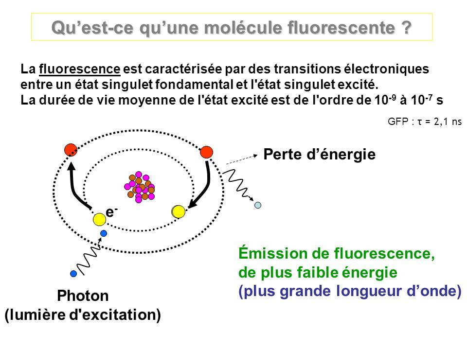 Quest-ce quune molécule fluorescente ? Photon (lumière d'excitation) Émission de fluorescence, de plus faible énergie (plus grande longueur donde) Per