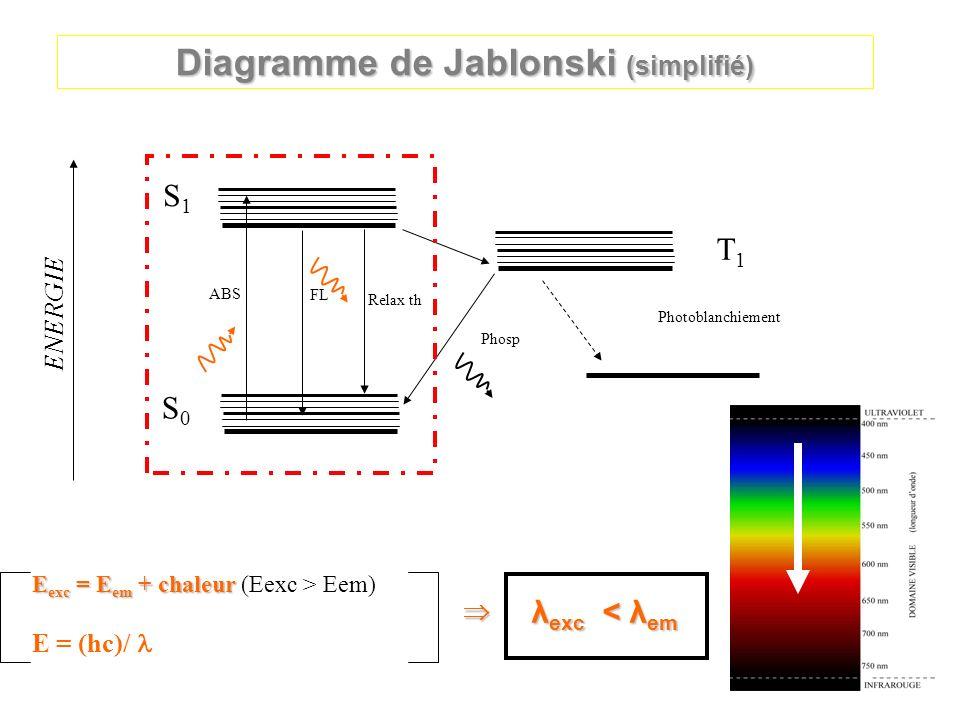 ENERGIE Diagramme de Jablonski (simplifié) S0S0 S1S1 T1T1 ABS FL Relax th Phosp Photoblanchiement E exc = E em + chaleur E exc = E em + chaleur (Eexc