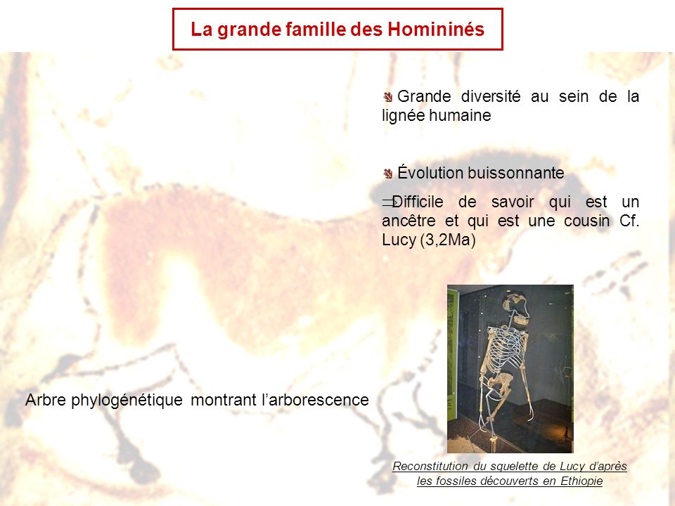 LHomme de Néanderthal, ancêtre ou cousin.