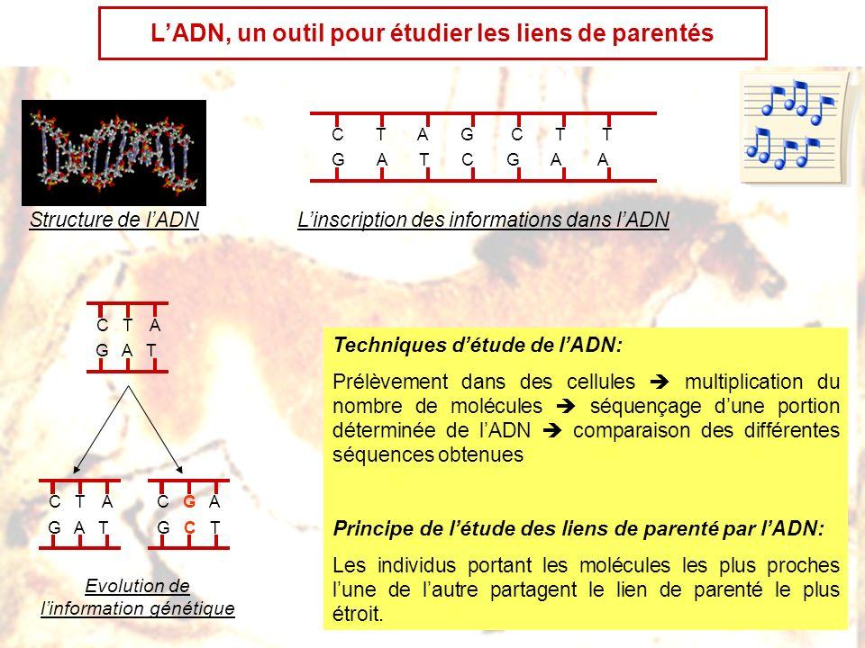 1987-1991: étude à grande échelle de lADN mitochondrial porté par des individus du monde entier Etude de la séquence de molécules dADNmt de 147 puis 189 personnes, des 5 continents, par une méthode indirecte puis par une méthode directe.