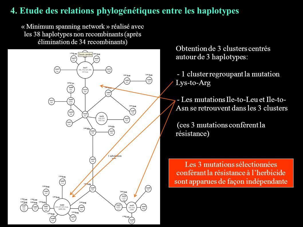 4. Etude des relations phylogénétiques entre les haplotypes « Minimum spanning network » réalisé avec les 38 haplotypes non recombinants (après élimin