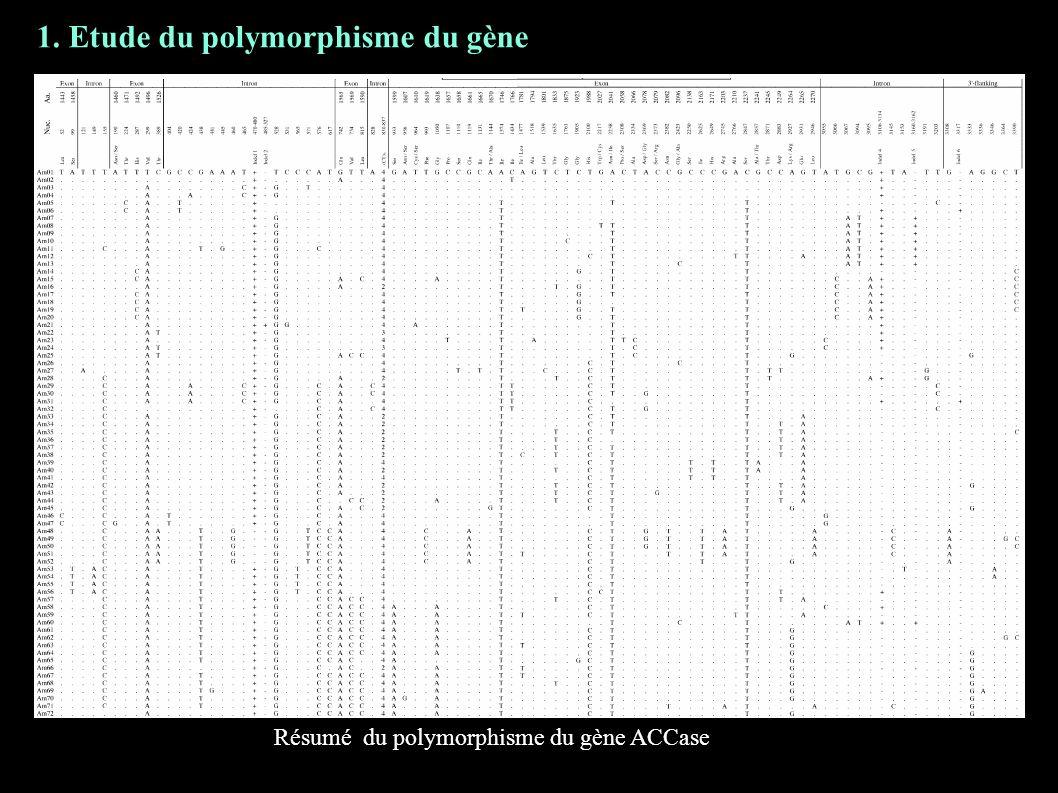1. Etude du polymorphisme du gène Résumé du polymorphisme du gène ACCase