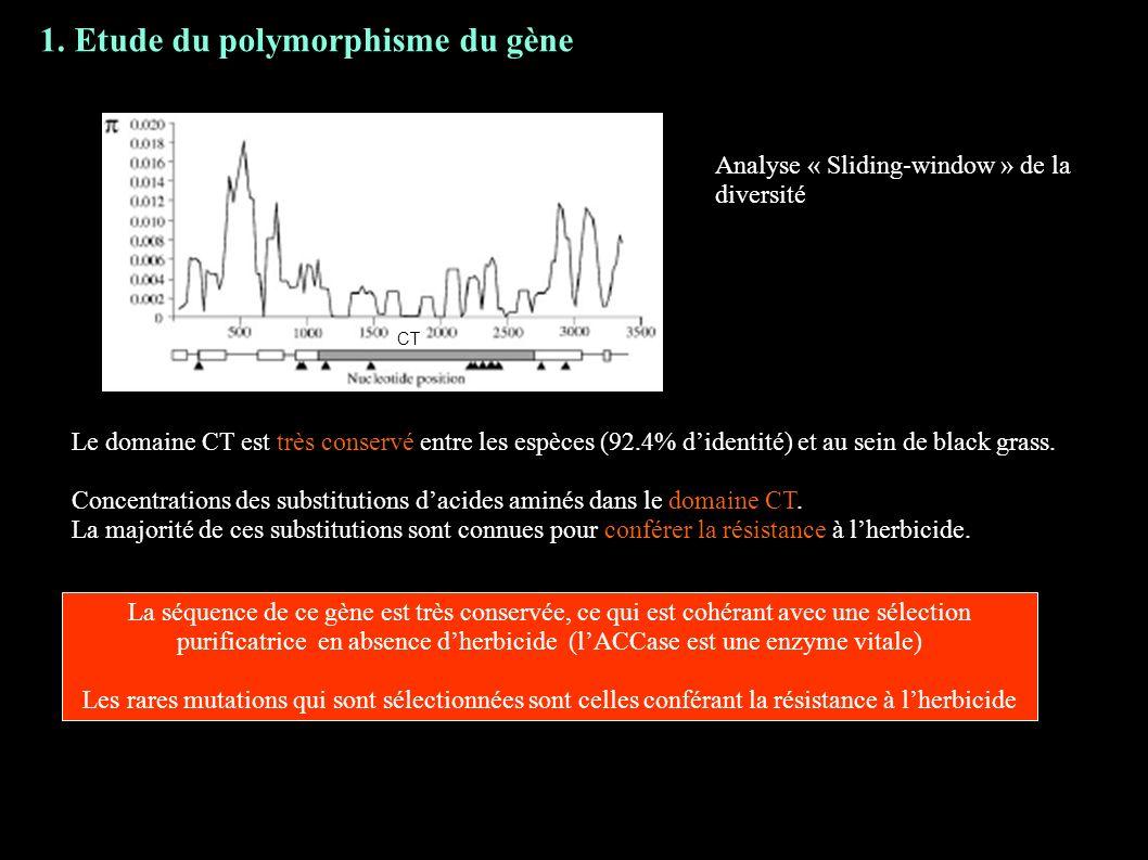 1. Etude du polymorphisme du gène Analyse « Sliding-window » de la diversité CT Le domaine CT est très conservé entre les espèces (92.4% didentité) et