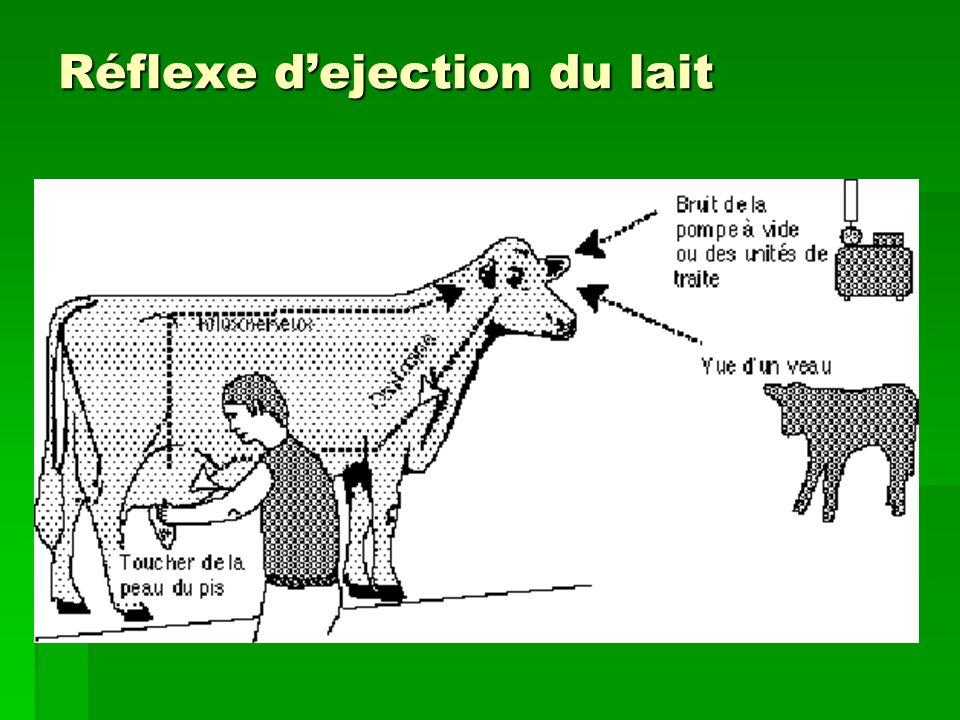 Réflexe dejection du lait