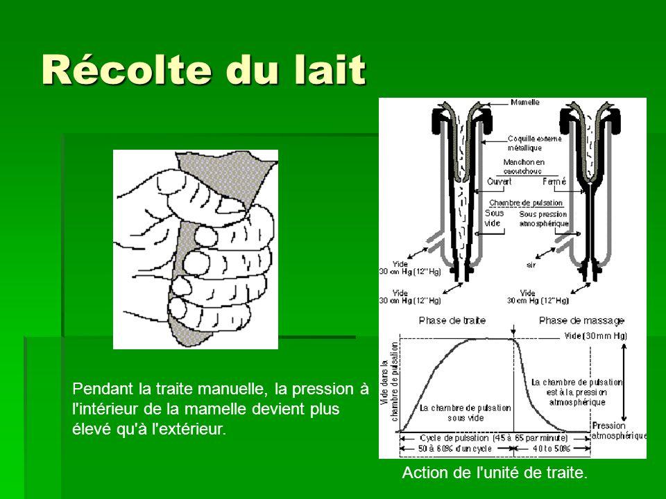 Récolte du lait Pendant la traite manuelle, la pression à l intérieur de la mamelle devient plus élevé qu à l extérieur.