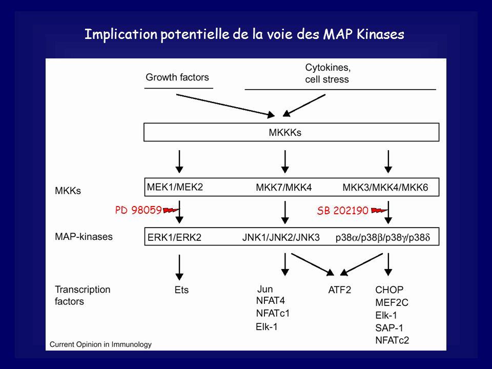 Implication potentielle de la voie des MAP Kinases PD 98059 SB 202190