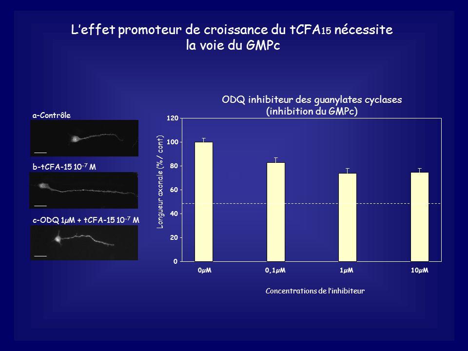 ODQ inhibiteur des guanylates cyclases (inhibition du GMPc) 0 20 40 60 80 100 120 0µM0,1µM1µM10µM Concentrations de linhibiteur Leffet promoteur de cr