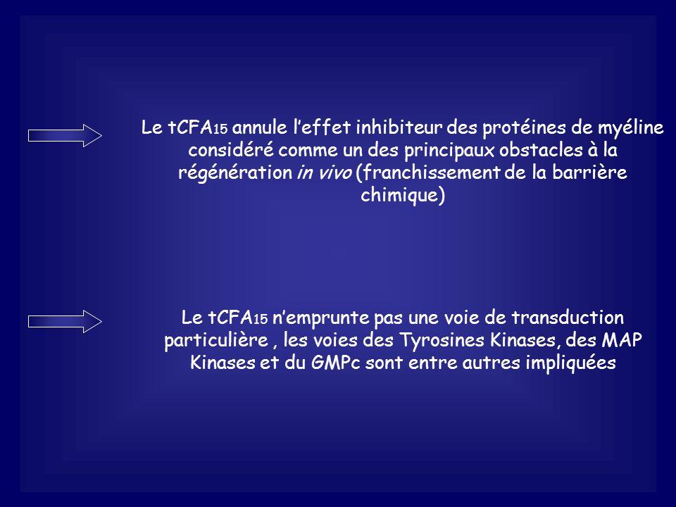 Le tCFA 15 annule leffet inhibiteur des protéines de myéline considéré comme un des principaux obstacles à la régénération in vivo (franchissement de