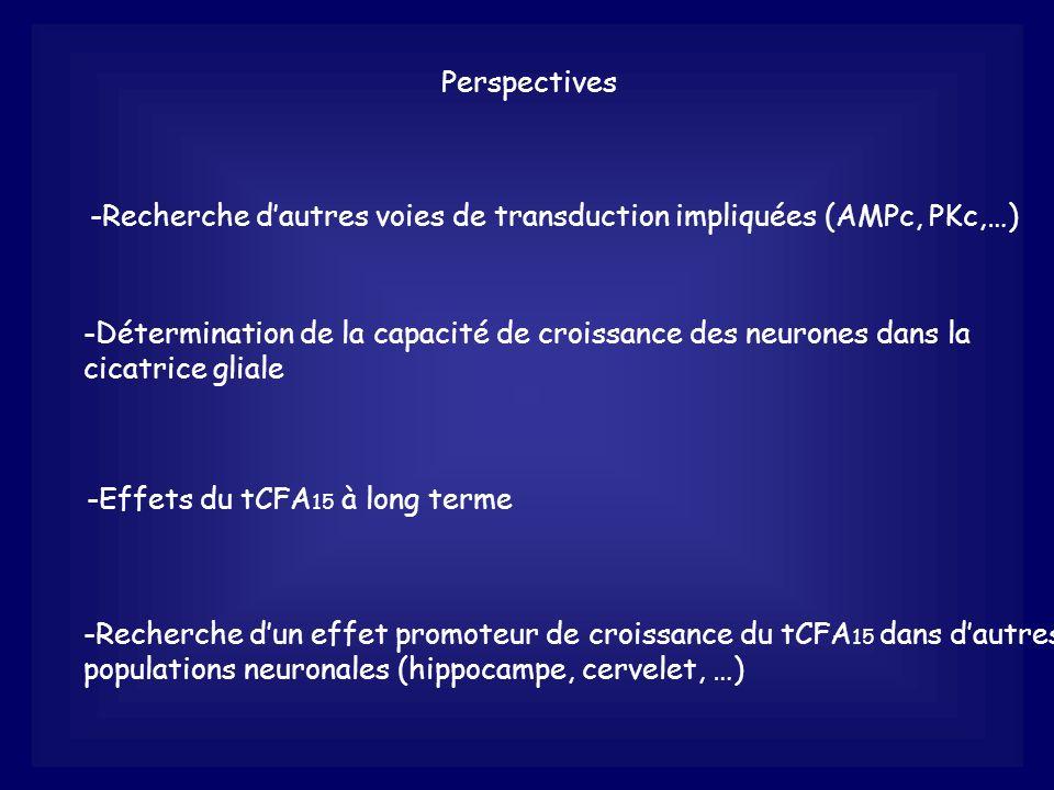 Perspectives -Recherche dautres voies de transduction impliquées (AMPc, PKc,…) -Détermination de la capacité de croissance des neurones dans la cicatr