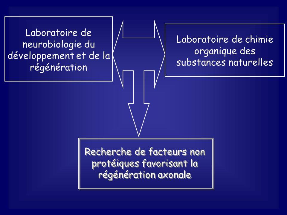 Laboratoire de neurobiologie du développement et de la régénération Laboratoire de chimie organique des substances naturelles Recherche de facteurs no