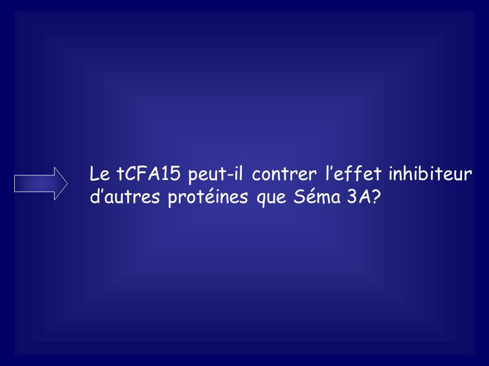 Le tCFA15 peut-il contrer leffet inhibiteur dautres protéines que Séma 3A?