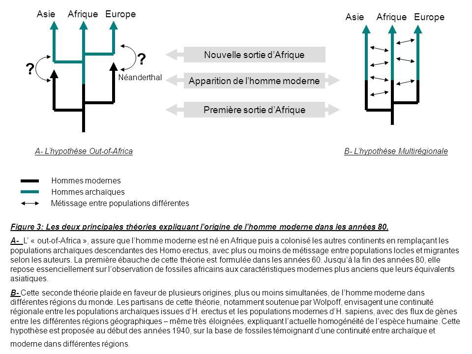 AsieAfriqueEurope Néanderthal ? ? AsieAfriqueEurope Première sortie dAfrique Apparition de lhomme moderne Nouvelle sortie dAfrique Figure 3: Les deux