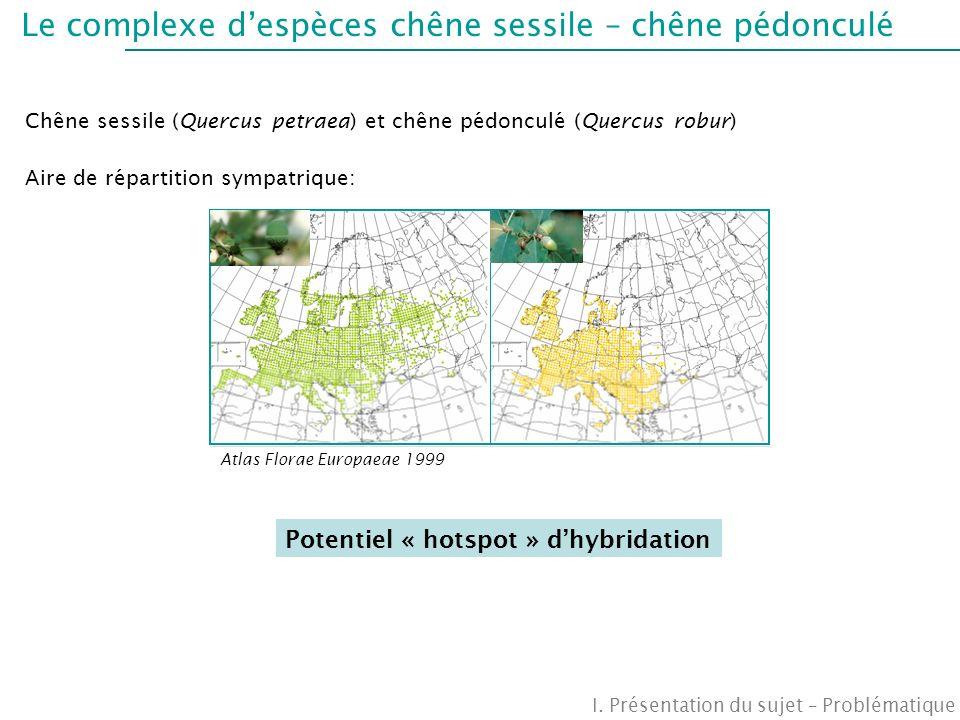 Le complexe despèces chêne sessile – chêne pédonculé I. Présentation du sujet – Problématique Chêne sessile (Quercus petraea) et chêne pédonculé (Quer