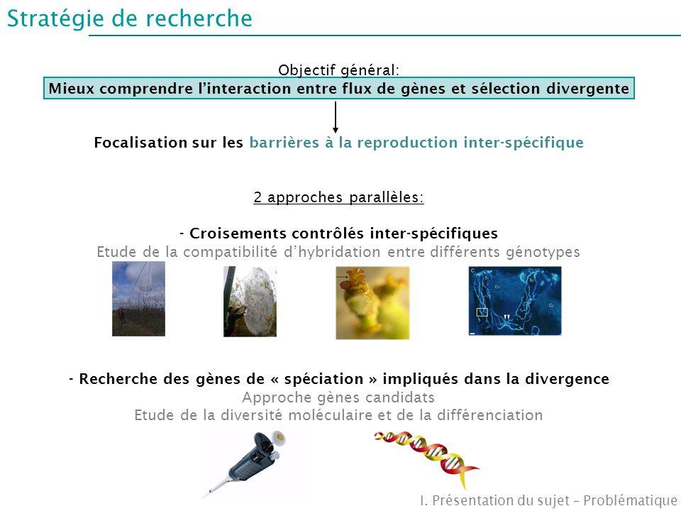 Stratégie de recherche I. Présentation du sujet – Problématique Objectif général: Mieux comprendre linteraction entre flux de gènes et sélection diver