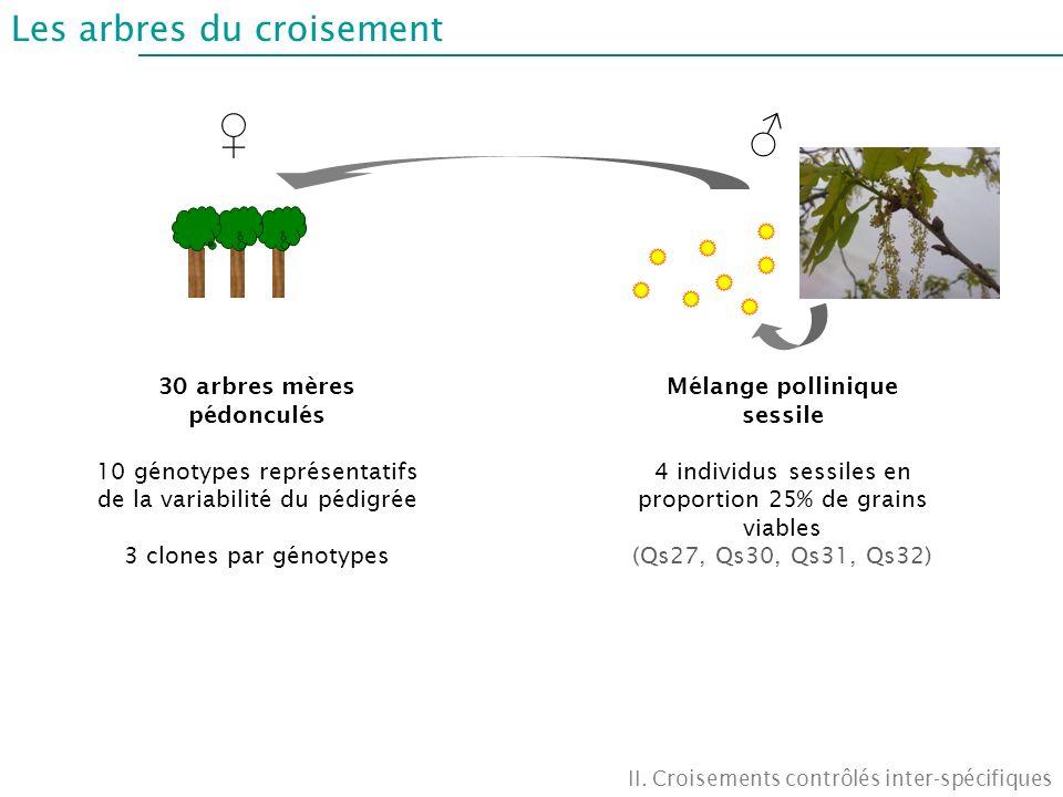 Les arbres du croisement II. Croisements contrôlés inter-spécifiques 30 arbres mères pédonculés 10 génotypes représentatifs de la variabilité du pédig