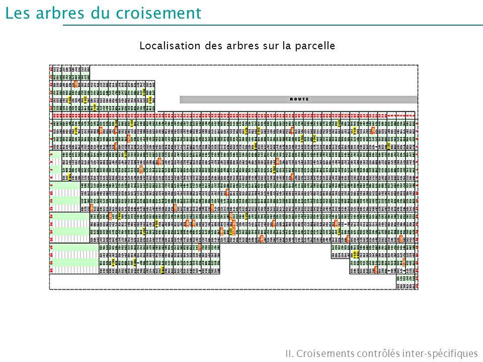 Les arbres du croisement II. Croisements contrôlés inter-spécifiques Localisation des arbres sur la parcelle