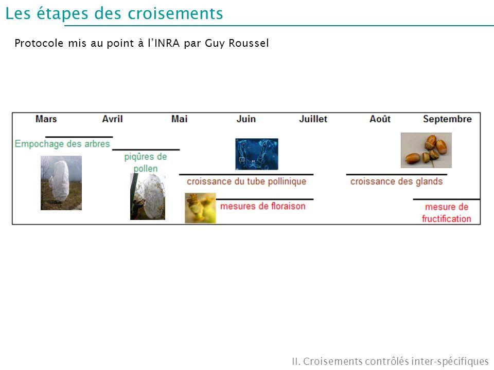 Les étapes des croisements II. Croisements contrôlés inter-spécifiques Protocole mis au point à lINRA par Guy Roussel