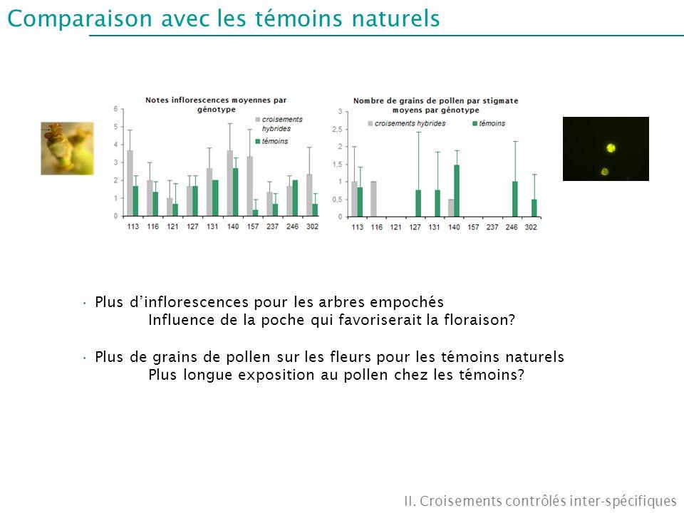 Comparaison avec les témoins naturels II. Croisements contrôlés inter-spécifiques Plus dinflorescences pour les arbres empochés Influence de la poche