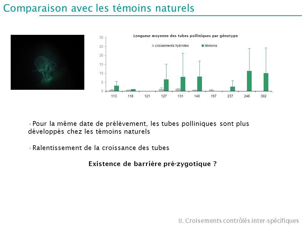 Comparaison avec les témoins naturels II. Croisements contrôlés inter-spécifiques Pour la même date de prélèvement, les tubes polliniques sont plus dé
