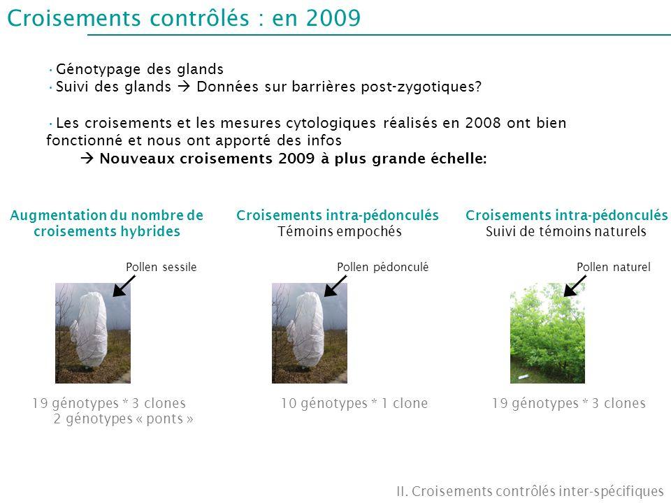 Croisements contrôlés : en 2009 II. Croisements contrôlés inter-spécifiques Génotypage des glands Suivi des glands Données sur barrières post-zygotiqu