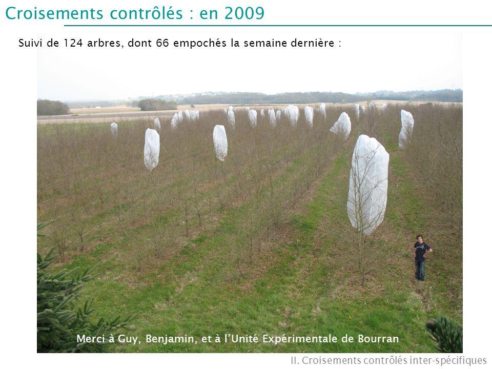 Croisements contrôlés : en 2009 II. Croisements contrôlés inter-spécifiques Suivi de 124 arbres, dont 66 empochés la semaine dernière : Merci à Guy, B