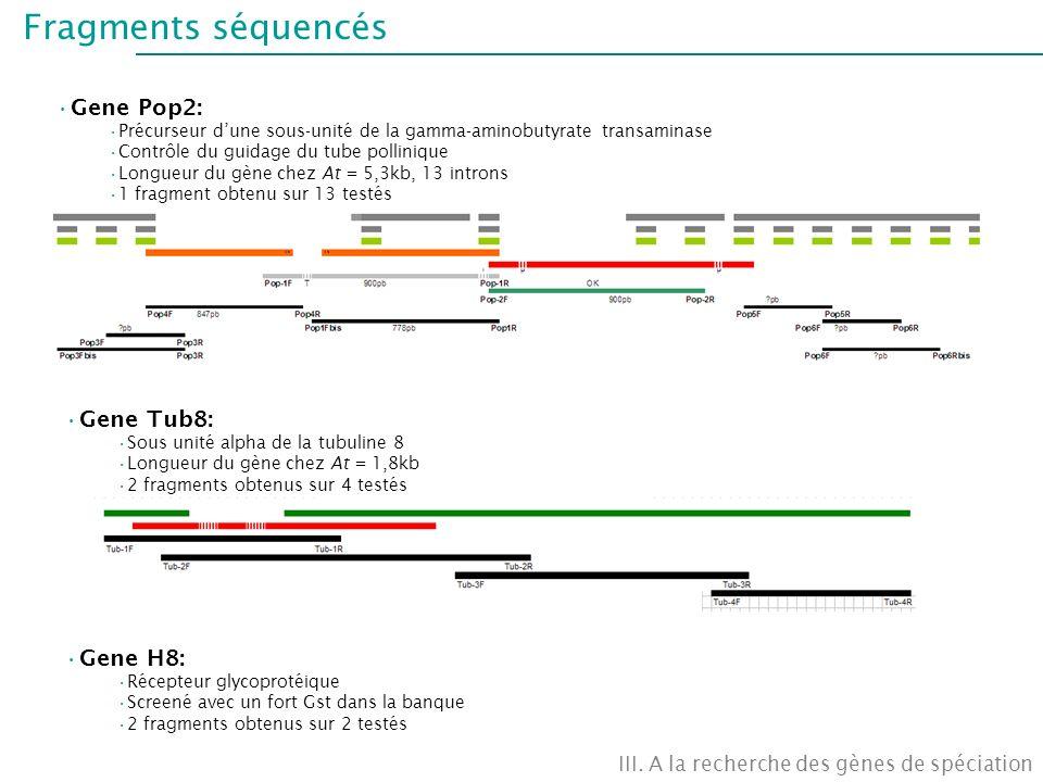 Fragments séquencés III. A la recherche des gènes de spéciation Gene Pop2: Précurseur dune sous-unité de la gamma-aminobutyrate transaminase Contrôle