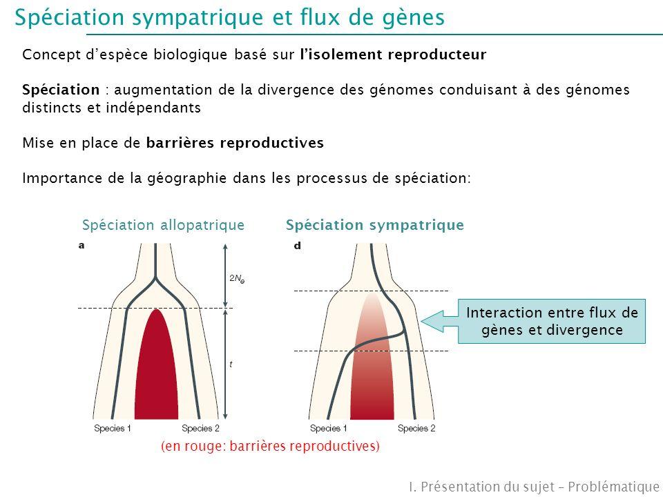 …mais des « hotspots » de différenciation Scotti-Saintagne et al., 2004 Cartographie des marqueurs: Existence de régions génomiques (~15cM) plus différenciées entre les deux espèces En accord avec la vision génique de la spéciation proposant un modèle de génome en mosaïque structuré en régions différenciées et perméables aux flux de gènes, dans le cadre dun processus de spéciation sympatrique I.