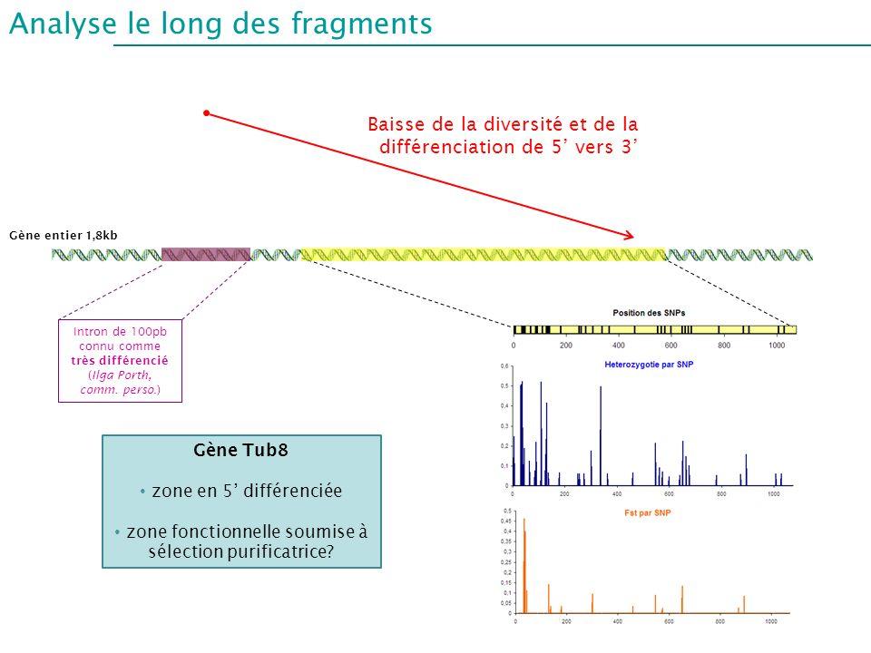 Analyse le long des fragments Intron de 100pb connu comme très différencié (Ilga Porth, comm. perso.) Gène entier 1,8kb Baisse de la diversité et de l