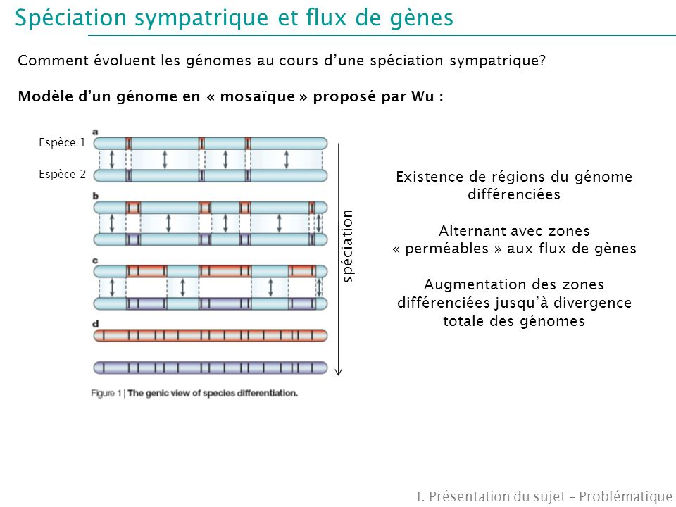 Stratégie de recherche Objectif général: Mieux comprendre linteraction entre flux de gènes et sélection divergente Focalisation sur les barrières à la reproduction inter-spécifique I.