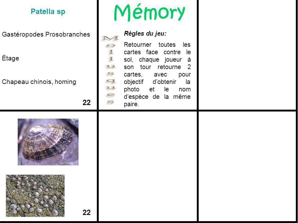 Patella sp Gastéropodes Prosobranches Étage Chapeau chinois, homing 22 Mémory Règles du jeu: Retourner toutes les cartes face contre le sol, chaque jo