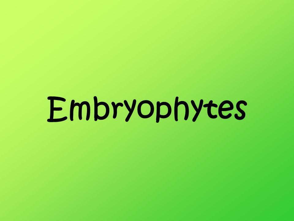 Embryophytes