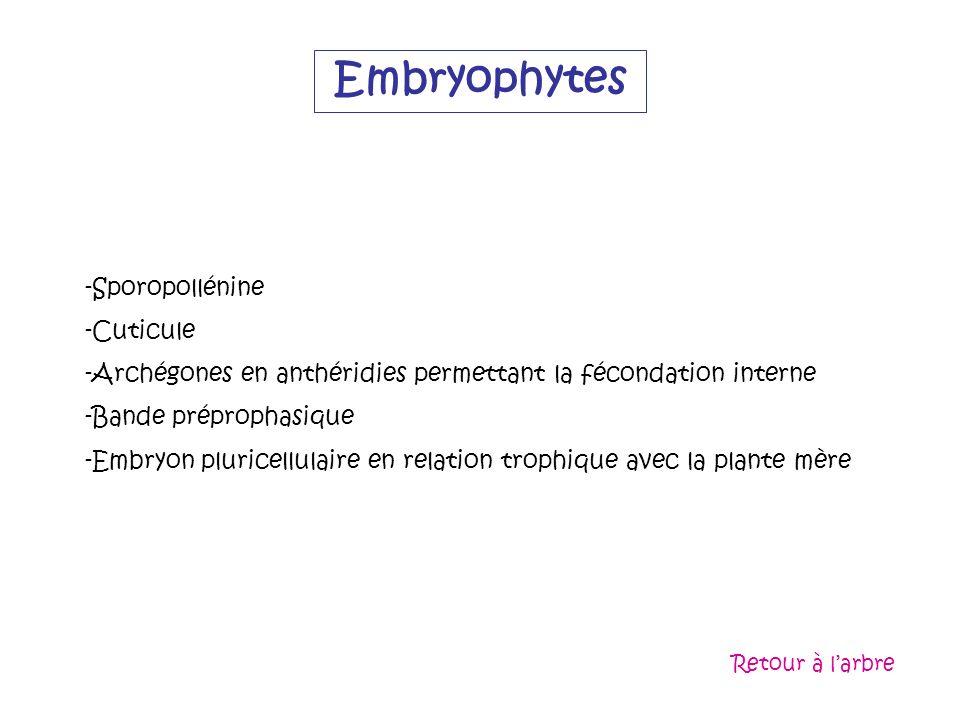 Embryophytes -Sporopollénine -Cuticule -Archégones en anthéridies permettant la fécondation interne -Bande préprophasique -Embryon pluricellulaire en