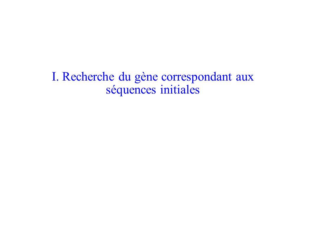 I. Recherche du gène correspondant aux séquences initiales