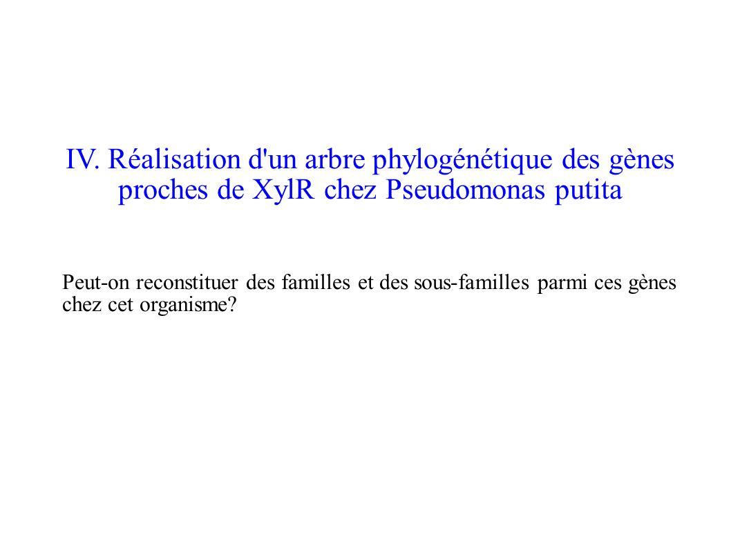 IV. Réalisation d'un arbre phylogénétique des gènes proches de XylR chez Pseudomonas putita Peut-on reconstituer des familles et des sous-familles par