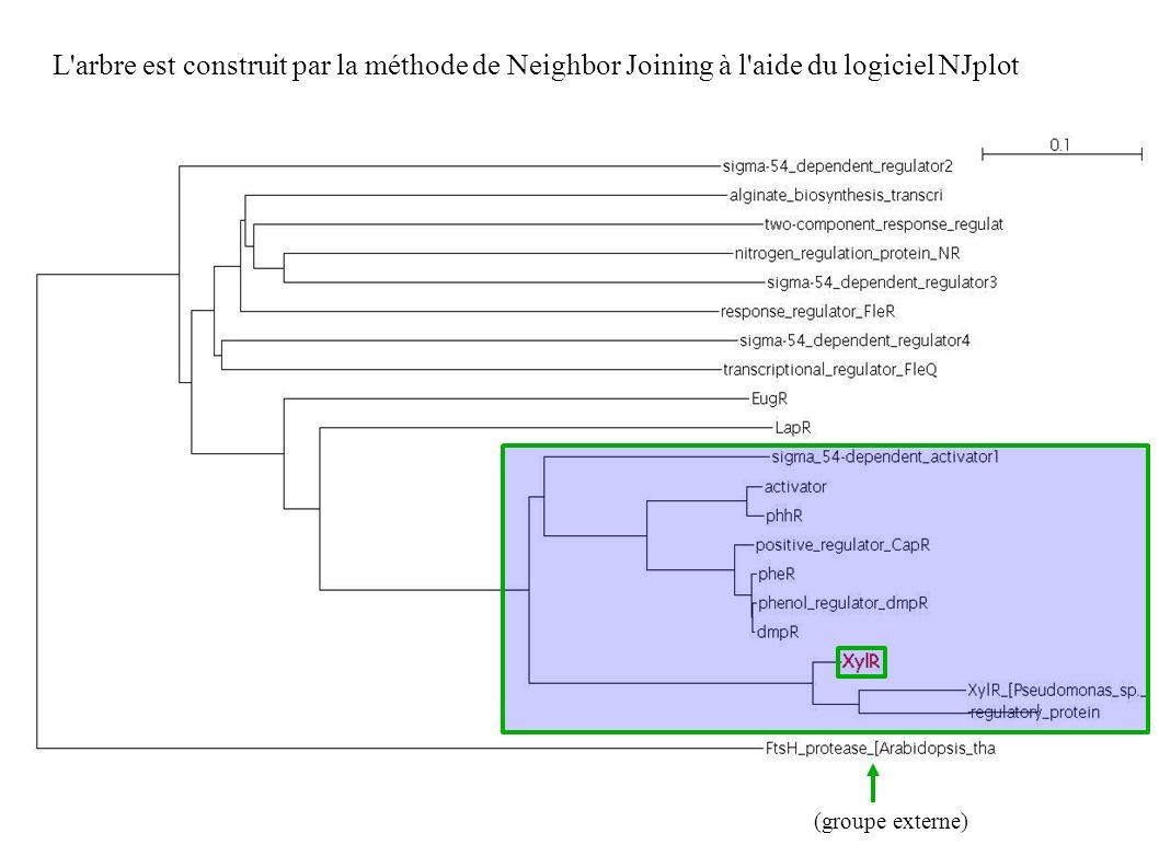 L arbre est construit par la méthode de Neighbor Joining à l aide du logiciel NJplot (groupe externe)