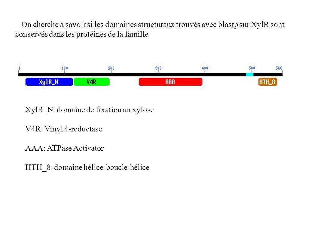 On cherche à savoir si les domaines structuraux trouvés avec blastp sur XylR sont conservés dans les protéines de la famille XylR_N: domaine de fixation au xylose V4R: Vinyl 4-reductase AAA: ATPase Activator HTH_8: domaine hélice-boucle-hélice