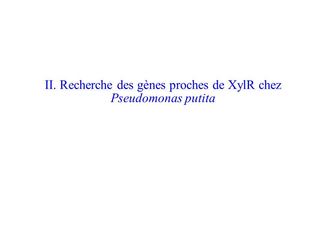 On cherche à faire une recherche exhaustive des gènes de la même famille que XylR chez Pseudomonas putita -> Utilisation du logiciel BlastP Problème: On ne peut pas effectuer le blast chez cet organisme exclusivement, on effectue donc la recherche chez toutes les bactéries.