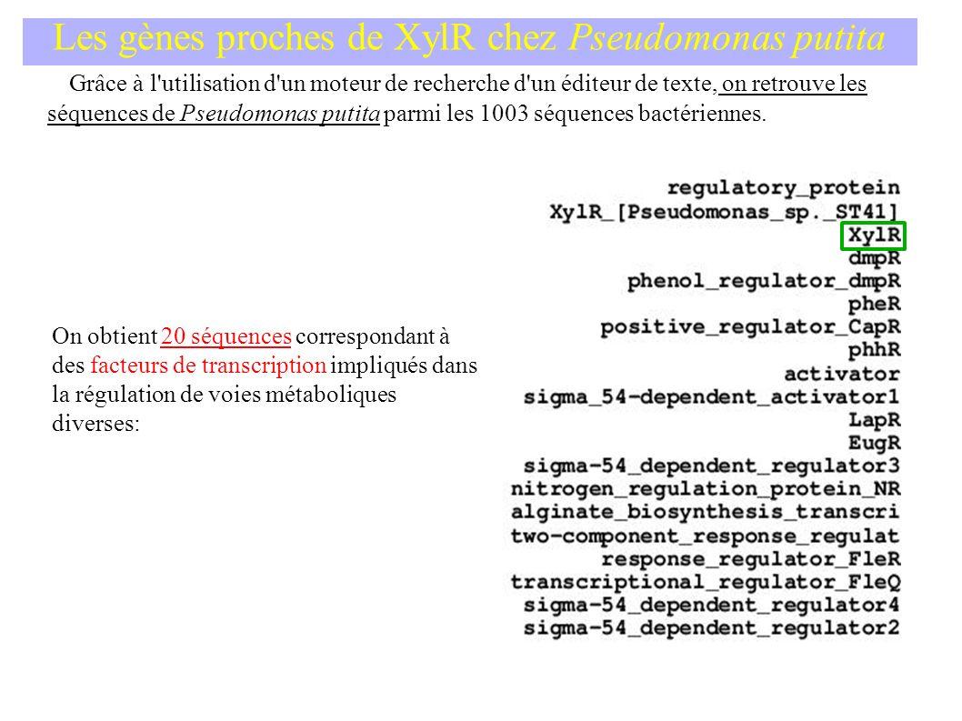 Les gènes proches de XylR chez Pseudomonas putita Grâce à l utilisation d un moteur de recherche d un éditeur de texte, on retrouve les séquences de Pseudomonas putita parmi les 1003 séquences bactériennes.