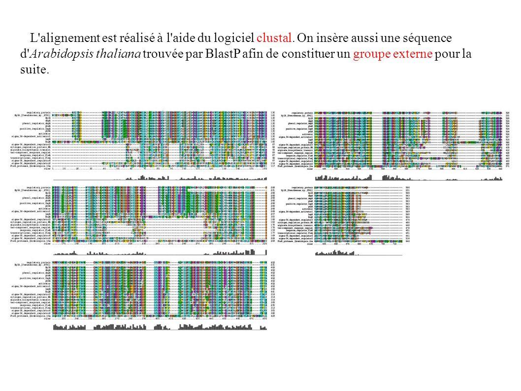 L alignement est réalisé à l aide du logiciel clustal.