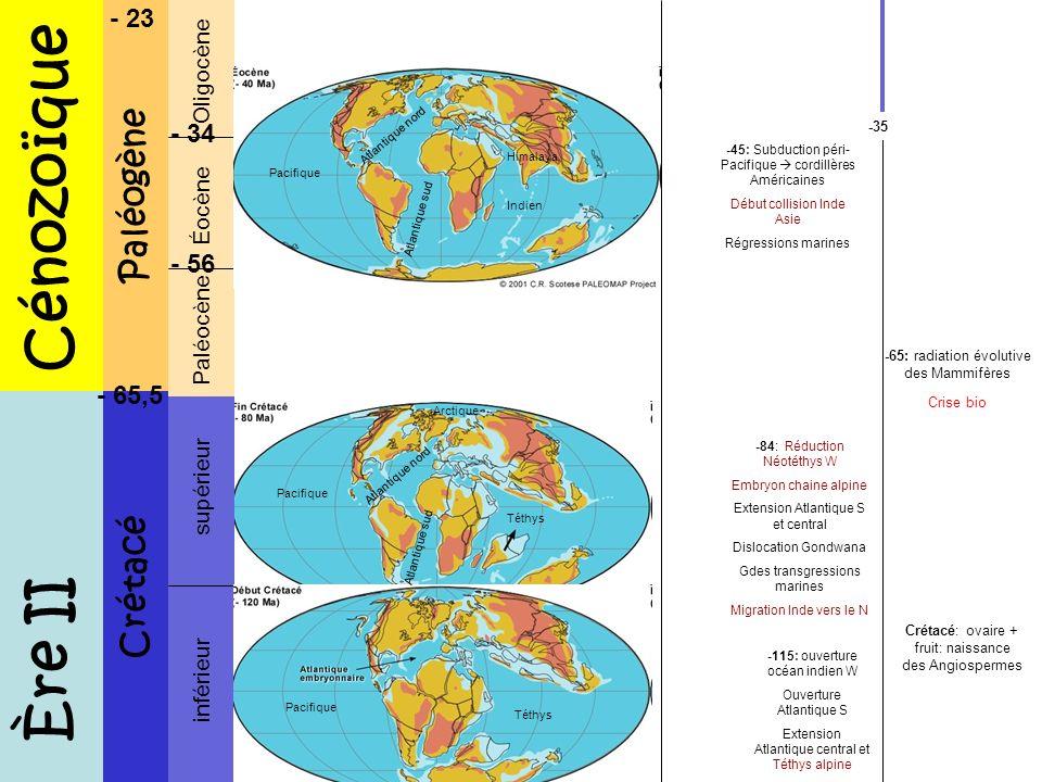 Ere III et IV Néogène Quaternaire Miocène Pliocène Pléistocène Holocène - 5,3 - 2,6 - 0,0118 -11: Ouverture complète Atlantique N Collision Inde Asie Himalaya Ouverture Médit occidentale Rifting mer rouge et Est Afrique -6: Millenium ancestor -4: 1ers Australopithèques; homininés bopèdes -2,6: 1ers outils -1,5: Homo ergaster -0,4: domestication du feu -0,25: 1ers H.sapiens -0,1: Néanderthaliens, diffusion des H.